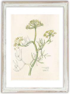 Sea fennel plant drawing Botanical PRINT plant by CATILUSTRE