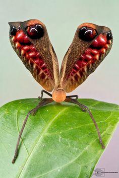 Peacock Katydid?  Is this photo shopped?