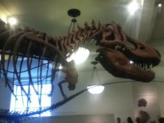 Yup Dinosaur Pictures, Yup, Chandelier, Museum, Ceiling Lights, Home Decor, Ceiling Lamps, Chandeliers, Interior Design