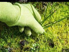 Evite o crescimento de ervas daninhas com estes dois tratamentos completamente naturais! :http://asenhoradomonte.com/2015/11/09/evite-o-crescimento-de-ervas-daninhas-com-estes-dois-tratamentos-completamente-naturais/