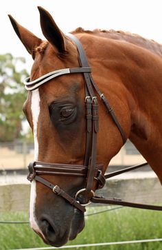 Mix and Match Gel Horse Bridles - Havana