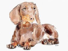The dachshund | Flickr - Photo Sharing!