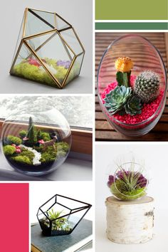 Most Inspiring Terrariums for your Home or Office Decor