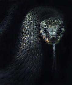 . Snake ★★★