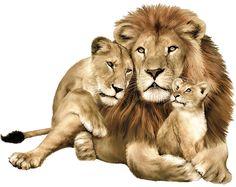 Resultados de la Búsqueda de imágenes de Google de http://www.africandiaspora.barule.org/Image_-_Lion_Family.gif