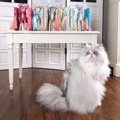 Fluffy silver chinchilla Persian cat with colorful books and vintage reindeer Canterbury Classics, Reindeer Christmas, Chinchilla, New Iphone, Bookstagram, Cats Of Instagram, Cute Cats, Persian, Cute Animals