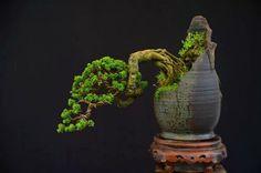 Bonsai estilo Han-Kengai