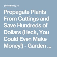 Propagate Plants From Cuttings and Save Hundreds of Dollars (Heck, You Could Even Make Money!) - Garden Therapy