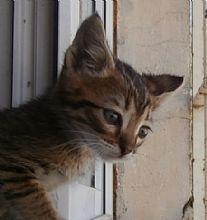 Gato Marius. Llegó con la primavera. Animals, Kittens For Adoption, Foot Prints, Spring, Gatos, Animales, Animaux, Animal, Animais