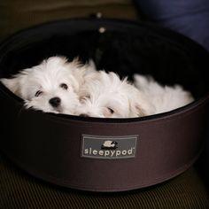 Sleepypod Brown