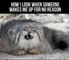 Hate being woken up!