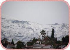 Schnee auf den Bergen und Palmen im kalten Wind.