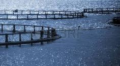 Resultado de imagen de sead from norway -salmon noruego