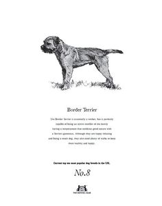 Border Terrier Tea Towel The Kennel Club Official Shop