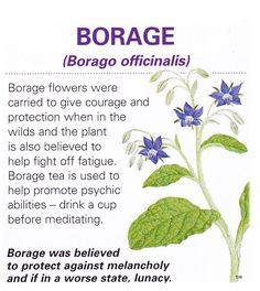 Magical flowers borage