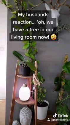 Fake Plants Decor, House Plants Decor, Plant Decor, Hanging Plants, Indoor Garden, Garden Plants, Indoor Plants, Garden Shrubs, Shade Garden