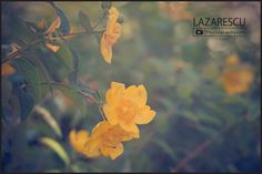 by Lazarescu R. Catalin on Summer Flowers, Warm Colors, Sunset, Nature, Plants, Beautiful, Naturaleza, Warm Paint Colors, Sunsets