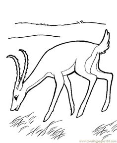 Coloring Page Fox animals coloring pages 6 fox Pinterest