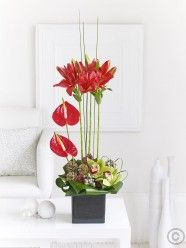 This modern arrangement for the home features anthurium and Asiatic lilies, all in a festive red shade. Christmas Flower Delivery, Best Flower Delivery, Online Flower Delivery, Flower Delivery Service, Christmas Garden, Christmas Flowers, Christmas Floral Arrangements, Flower Arrangements, Online Flower Shop