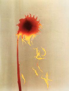 Adam Fuss, Untitled (Silver dye bleach Cibachrome,1992)