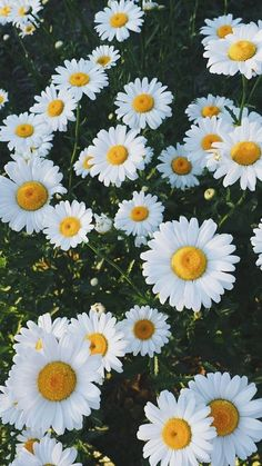 37 new ideas flowers photography wallpaper backgrounds daisies Cute Backgrounds, Aesthetic Backgrounds, Aesthetic Iphone Wallpaper, Cute Wallpapers, Wallpaper Backgrounds, Aesthetic Wallpapers, Iphone Wallpapers, Iphone Backgrounds, Homescreen Wallpaper