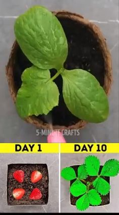 Planting seeds is true art. Here is how you can fertilize them better and ensure a steady and healthy growth 🤗🌱 Vegetable Garden Planning, Home Vegetable Garden, Fruit Garden, Edible Garden, Potted Garden, Planting Vegetables, Growing Vegetables, Growing Plants, Planting Bulbs