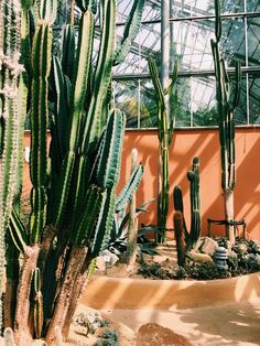 Amsterdam - Hortus Botanicus - Greenhouse - Cactus & succulent garden - architecture inspiration Amsterdam, Cactus, Plants, Travel, Viajes, Cactus Plants, Planters, Trips, Traveling