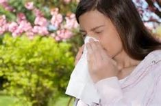 Did you know that essential oils can treat allergies? Yes, many people have been using these oils for years to get relieve from annoying allergy symptoms. This has been a proven fact after years of laboratory research, safety evaluations, and clinical practice. Keep on reading to know about some of the common essential oils for …