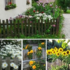 Balcony Flowers, Permaculture, Garden Inspiration, Flora, Yard, Nature, Plants, Word Problems, Gardens