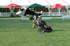 flying dog 2.0.
