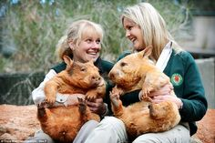 Senior keeper Karen Davis and education officer Claire Peterson with rare golden southern hairy nosed wombats Icy and Polar at Cleland Wildlife Park. Beautiful Creatures, Animals Beautiful, Cute Animals, Wild Animals, Unusual Animals, Funny Animals, Australia Animals, Quokka, Wombat