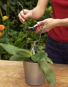 The 5 golden rules of orchid care- Die 5 goldenen Regeln der Orchideenpflege Tips for orchid care: New buds often form from the buds at the base of the old flower stems. Therefore, do not cut off the stems completely. Orchid Care, Potted Plants Patio Ideas, House Plant Care, Potted Plants Patio, Garden Decor, Flower Care, Garden Care, Plants, Herbs