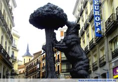 Oso Madroño - Madrid   Espanha
