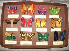 Vlinder kastje 3
