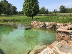 Swimming Pool Pond, Natural Swimming Ponds, Swimming Pool Landscaping, Ponds Backyard, Swimming Pool Designs, Garden Pond Design, Garden Pool, Swimming Pool Architecture, Plunge Pool
