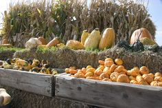 Fall Colors, Snow, Rock Creek Pumpkins | A Travel for Taste