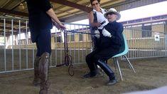 Charles de Kunffy explains Half Halts - YouTube Horse Riding Tips, Horse Tips, Horse Training, Training Tips, Horse Exercises, Riding Lessons, Dressage Horses, Equestrian Outfits, Horseback Riding