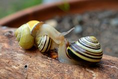 Snails. Click to see more of Adorable Animal Pictures for Valentine's Day | Animals Zone