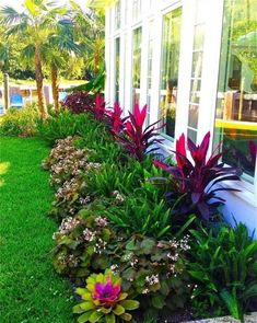 Affordable Landscaping Ideas For Your Front Yard That Will Inspire You. Normally, the front yard is regarded as the public region of the residence. The front yard of your home states a great deal about you. Possessing a dr. Front Yard Landscaping Plans, Florida Landscaping, Tropical Landscaping, Backyard Landscaping, Backyard Ideas, Tropical Backyard, Landscaping Software, Pool Ideas, Canna Lily Landscaping