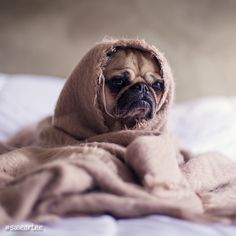 Cold little puppy! oooohh ➡️ join @sweartee if you feel like it! #sweartee  Enjoy the MUSIC we curated for you https://smarturl.it/freshsnd   #puppy #bulldog #cute #dog #bulldoglife #puppylove #bulldogs #englishbulldog #bulldogsofinstagram #bulldoglove #cuteness #love #puppydog #bulldogram #bulldogsofig #dogs #bulldogpuppy #puppies #bulldogingles #bulldogmoments #bulldogfrances #cutenessoverload #bulldogdays #frenchbulldog #instadog #bulldoglovers #puppiesofinstagram #puppylife…