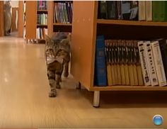 Kuyza walked into a library in Novorossiysk, Russia, and has lived there ever since.
