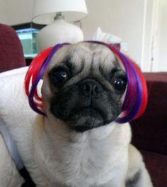 Raver Pug #pugs
