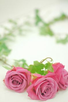 Find images and videos about pink, flowers and rose on We Heart It - the app to get lost in what you love. Beautiful Pink Roses, Hot Pink Roses, Beautiful Flowers Wallpapers, Romantic Flowers, Love Rose, Amazing Flowers, Pretty Flowers, Pretty In Pink, Jesus E Maria