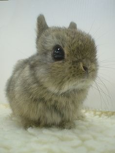 """I will google """"Japanese bunny"""" every now and then to make me feel better. It has never failed me. :)"""