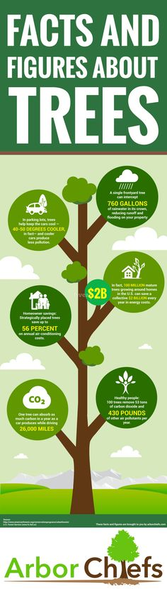 Amazing Facts and Figures About Trees #Infographic #Facts #Plants #Trees