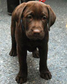Calma el malestar estomacal de un perro Utilice Pepto Bismol para ayudar con el malestar estomacal y vómitos. Utilice esto sólo para los perros, contiene una sustancia similar a la aspirina, que es malo para los gatos. Dosis para un perro: dosis de un niño por cada 40 libras de peso corporal cada seis horas. Por ejemplo: Un perro de 10 libras recibiría una cuarta parte de la dosis de un niño y un perro de 80 libras recibiría el doble de la cantidad de dosis de un niño.