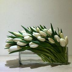 A wave of Sunday goodness #tulips #wave #organic #white #clean #simple #elegant #flowers #poho #pottspoint
