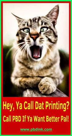 Photo Catalog Printing, Best Pal, Cats, Prints, Animals, Gatos, Animales, Animaux, Animal