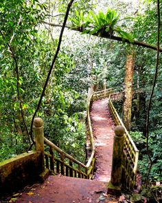 A bridge leads to the forest in Cúc Phương National Park  photo by Richard M. Murphy