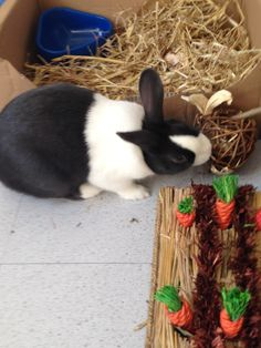 Winston enjoying his first delivery from us and playing with his Carrot Patch rabbit toy. #lovethemhappy #rabbits
